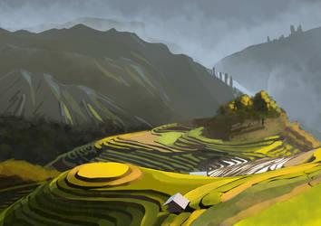 Rice field study by T-ry