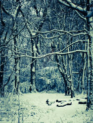 Amazing Nature Scenery Photo