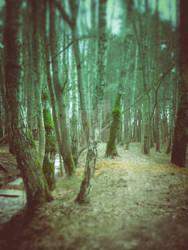Woodland Cold Tones