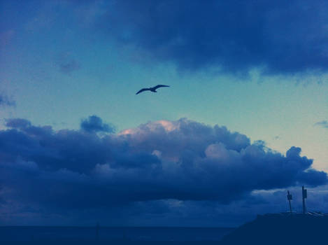Gull and Sky Got The Blues (Postcard size only)