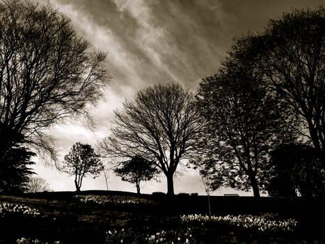 Spring Trees B+W