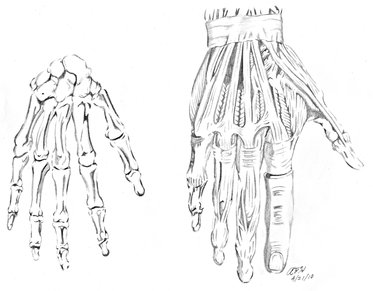 Skeleton Hand Drawing Coloring Pages