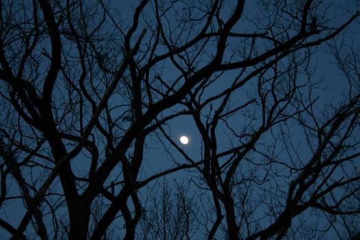 Nouveau Moon