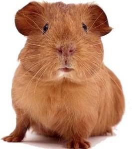 sugarloafer's Profile Picture