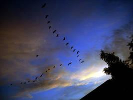 Let me fly by Naraika