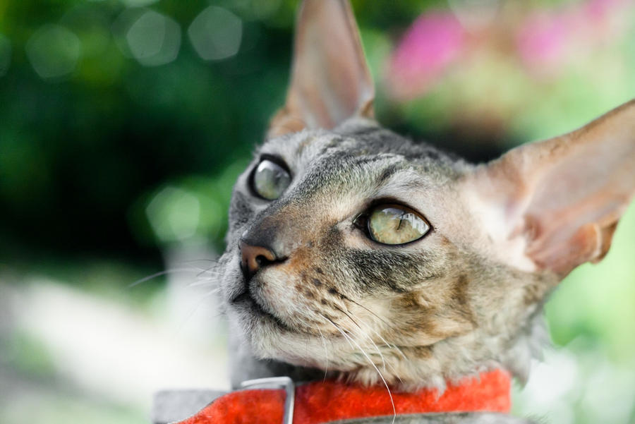 Will Cats Trust Owners With Kittens
