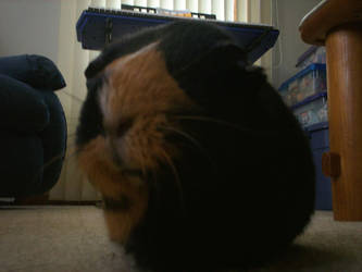 Piggy Close Up by lonewerewolf