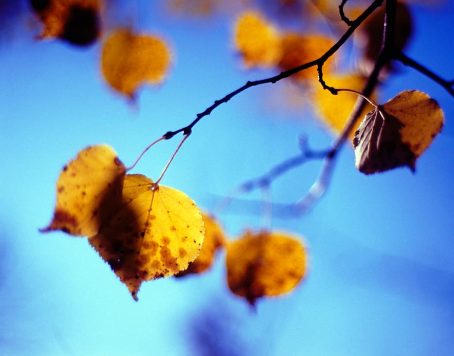 Autumn leaf by StarTigerOne