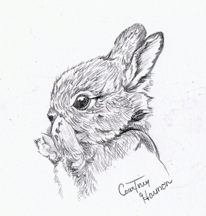 Baby Bunny Quick Sketch By Passiononpaper On DeviantArt