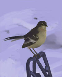 Life Study of a Bird by Otter87