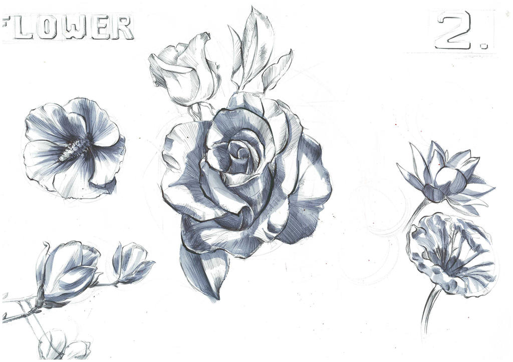Traditional Flower Line Drawing : Flowers grey marker rendering donbosco1937 by on deviantart