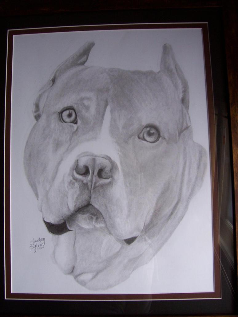 Pin Drawing Pit Bulls Httpajilbabcompitbullpitbull ...