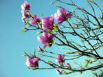 Magnolia by LaRoseDePetitPrince