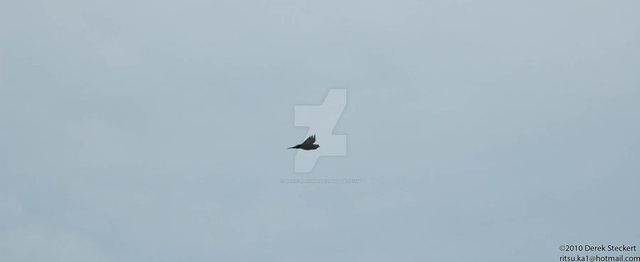 Graceful flying by Hero-Ritsuka