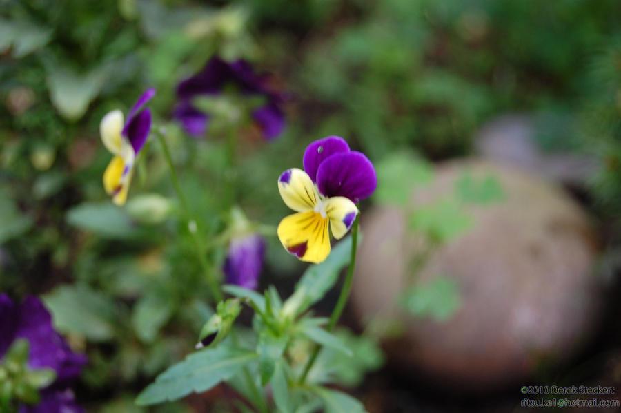 just blooming by Hero-Ritsuka
