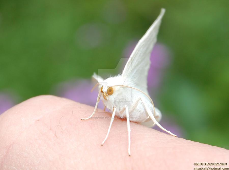 My little moth friend by Hero-Ritsuka