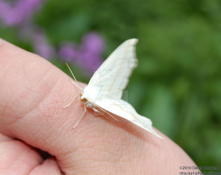 My little moth friend 2 by Hero-Ritsuka