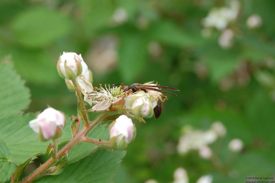 Hungry Wasp by Hero-Ritsuka