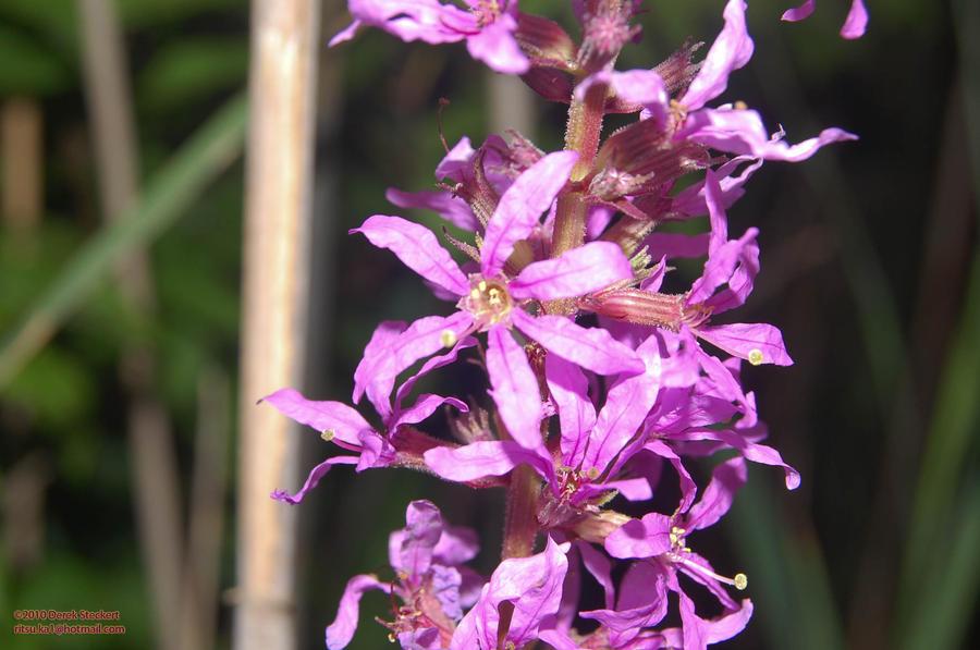 purple by Hero-Ritsuka