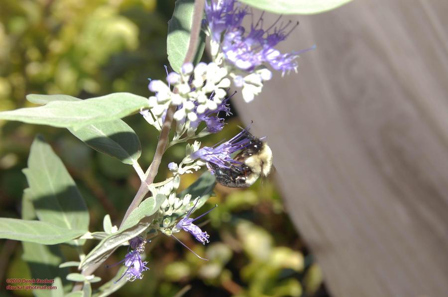 Bumble bee by Hero-Ritsuka
