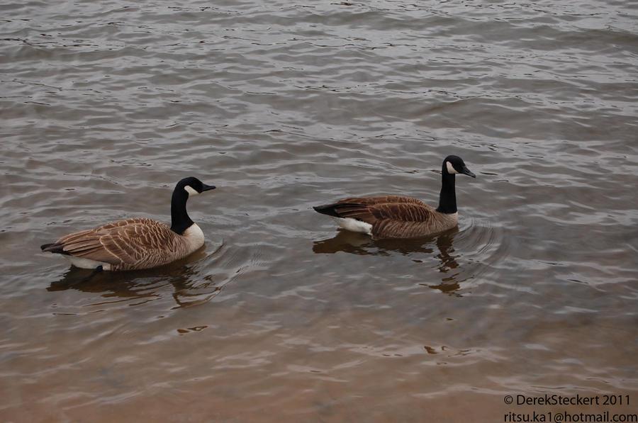 Goose Geese by Hero-Ritsuka