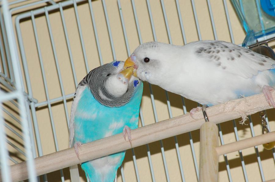 kiss by Hero-Ritsuka
