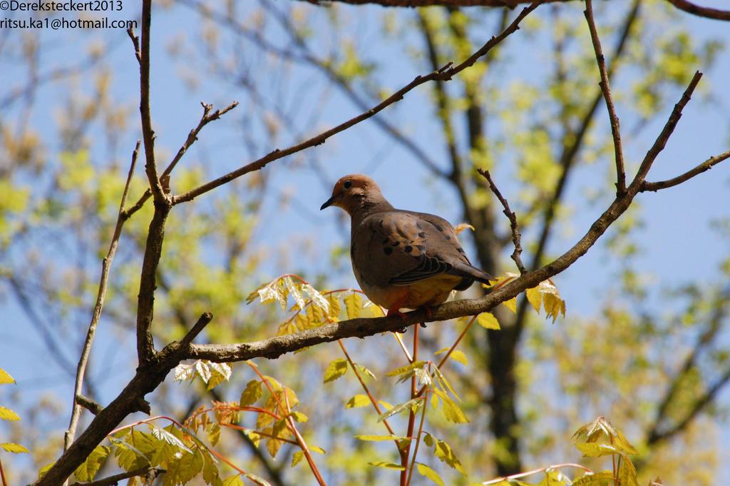 Photogenic Dove by Hero-Ritsuka