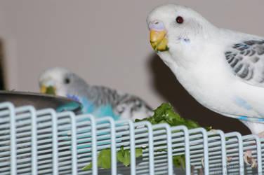 Green beak by Hero-Ritsuka