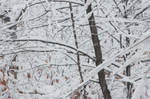 wintery scene of winter snow during fall