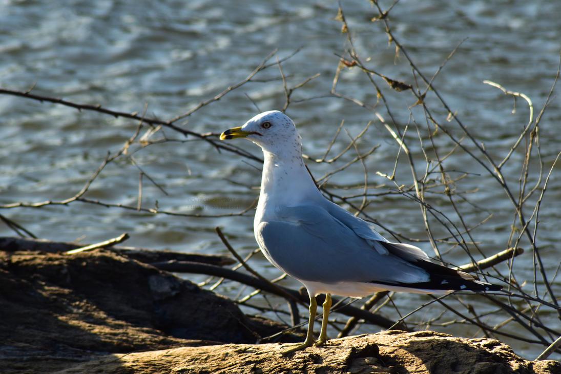 Watcher of the flock by Hero-Ritsuka