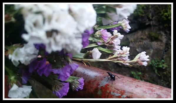 Beetles Deserve Flowers Too