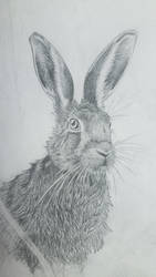 The Hare by EvelienHoncoop