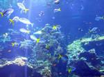 Coral-reef6