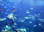 Coral-reef7