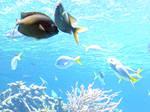 Coral-reef8