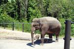 Elephants-Zoo1 by Trisaw1