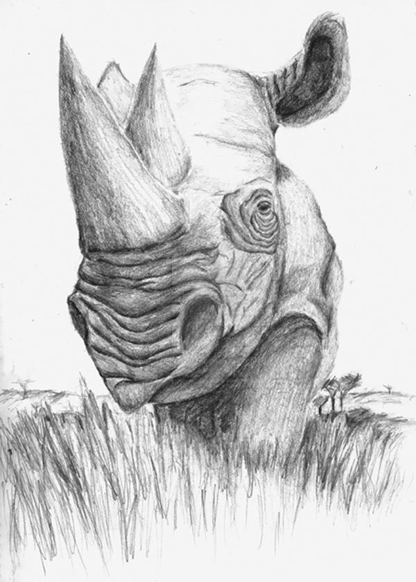 Portrait of a Rhino by Jezzy-Fezzy
