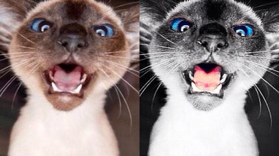 Dusty Cat by greenmonkey15