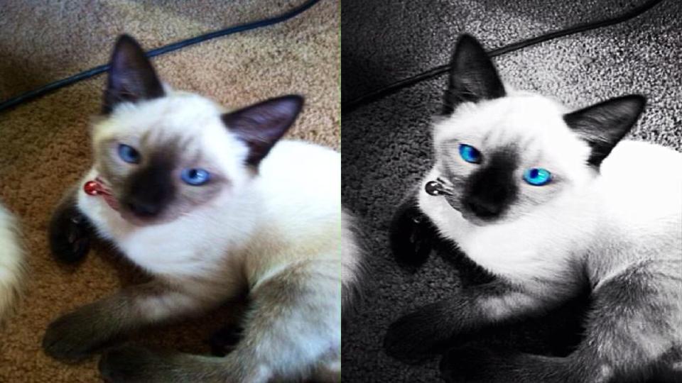 Siamese Cat by greenmonkey15