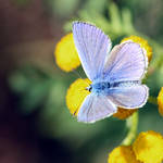 Lady in blue by Angie-Pictures