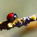 Walking on the ladybugs carpet