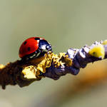 Walking on the ladybugs carpet by Angie-Pictures