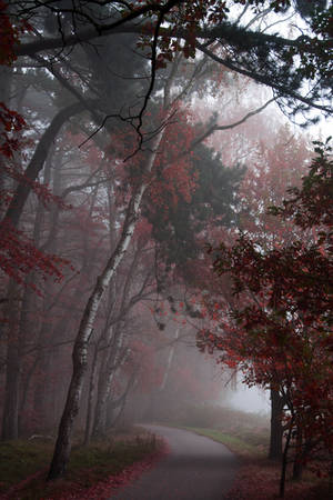 In the mist by Angie-Pictures