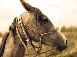 horse by ivjoe