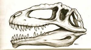 Giganotosaurus study/reference by agentcoleslaw