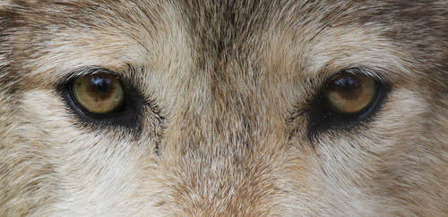 It's In The Eyes: Apache by Jack-13