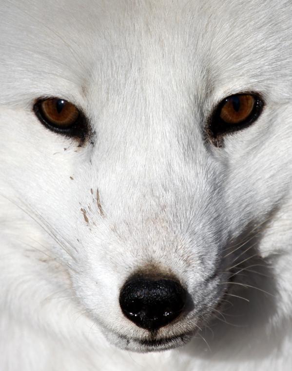 name fox eyes - photo #18