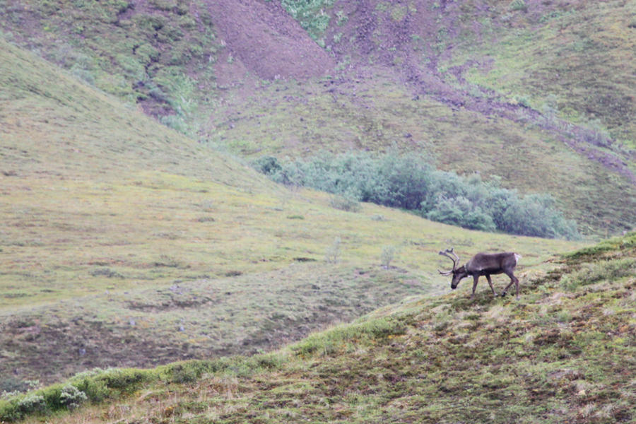 ridgetop chat sites Brett, the new owner, and his young family were lovely to chat with and made us feel very welcome you will enjoy the rustic nature of ridgetop while you visit denali stayed: august 2015, traveled with family.