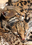 Cuddle Kitties 2