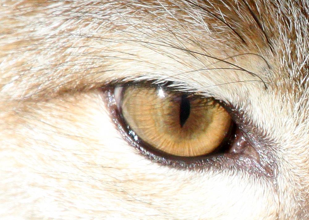 name fox eyes - photo #33